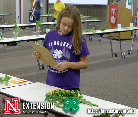 4-H and FFA Contests