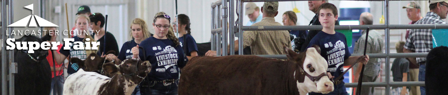 4-H & FFA Beef Show - Lancaster County Super Fair