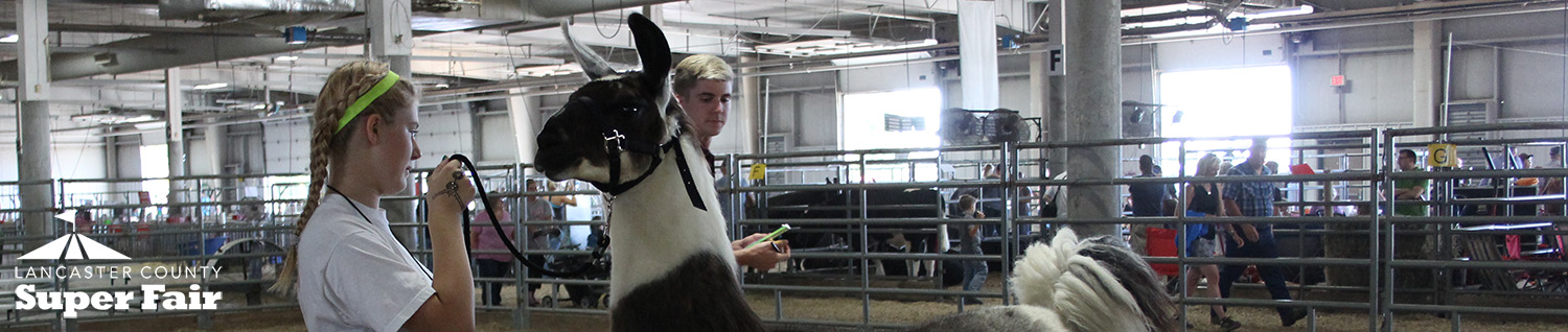 4-H Llama Show - Lancaster County Super Fair