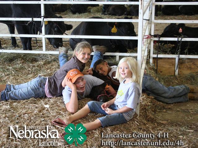 bucket bottle calf show | What's the BUZZ...  |Bucket Calves