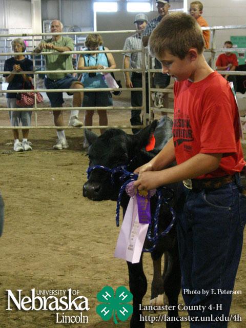 8 tips for raising bucket calves | Living the Country Life ...  |Bucket Calves