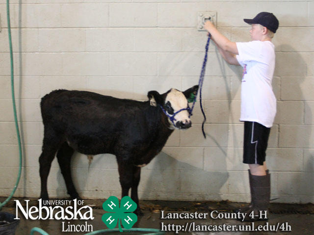 How to Raise Bucket Calves: 13 Steps (with Pictures)  |Bucket Calves