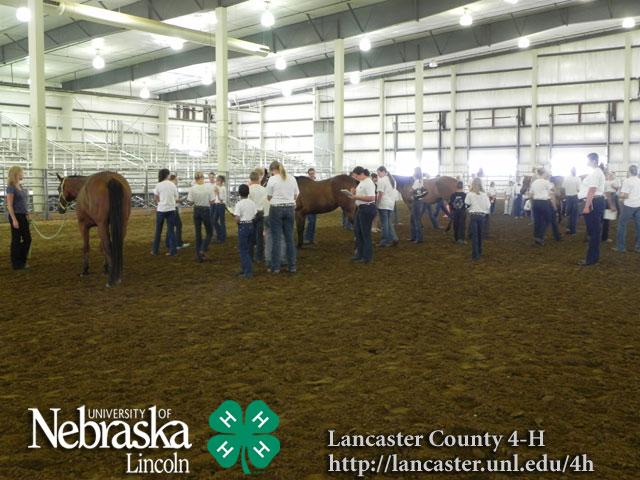 Lancaster County Super Fair 4 H Amp Ffa Photos Amp Results