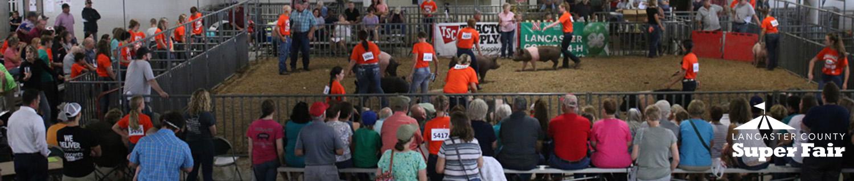 Lancaster County Super Fair - 4-H/FFA Results | Nebraska