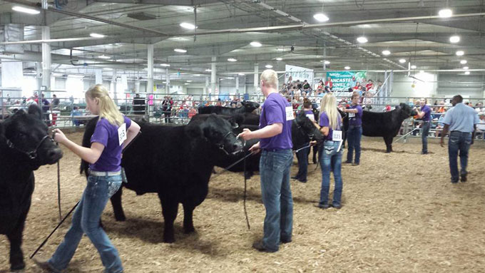 4-H and FFA Beef Show at the Lancaster County Super Fair