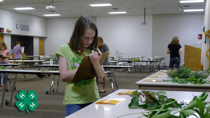 Youth Gardening - County/State Fair Contest Resources