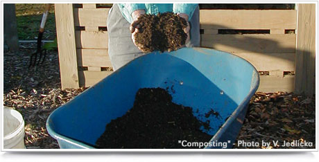 Composting to Reduce Waste