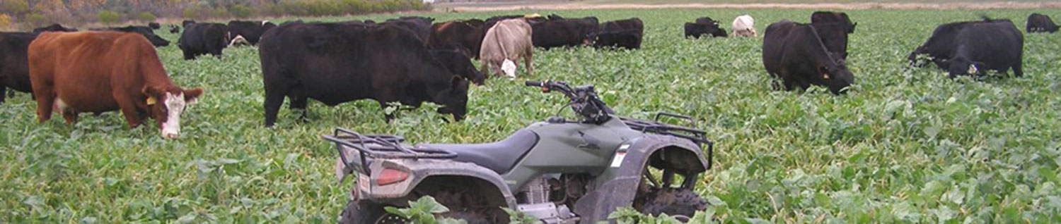 Growing and Grazing Cover Crops