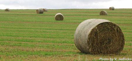 Forages Acreage Farm Amp Ranch Nebraska Extension In