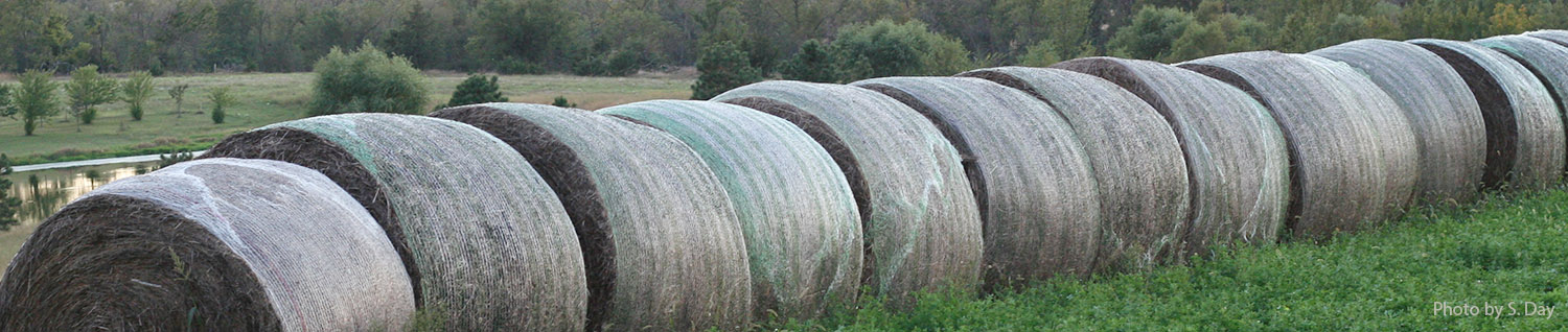 Bales by Sheila Day