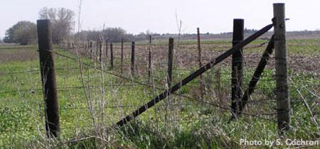Fencing & Watering Livestock