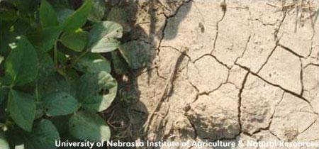 Soils and Nutrient Managemen