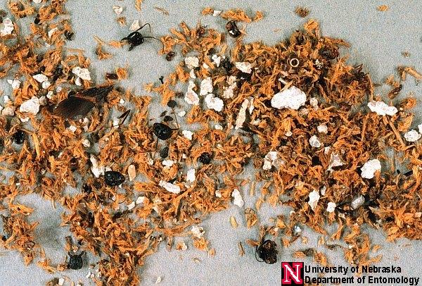 Do Termites Leave Sawdust ~ Carpenter ant control north jersey termite