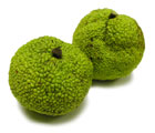 Hedge apples