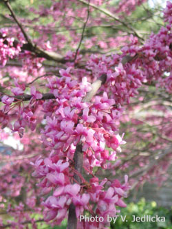 Best time to prune trees and shrubs