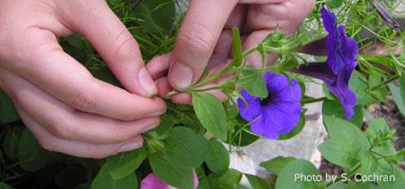 Growing Annual Flowers Growannualflowers Nebraska Extension In