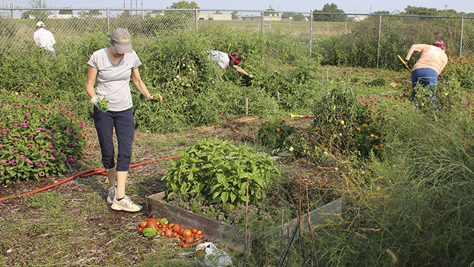 Be a Master Gardener - Community Gardening Photos on-line