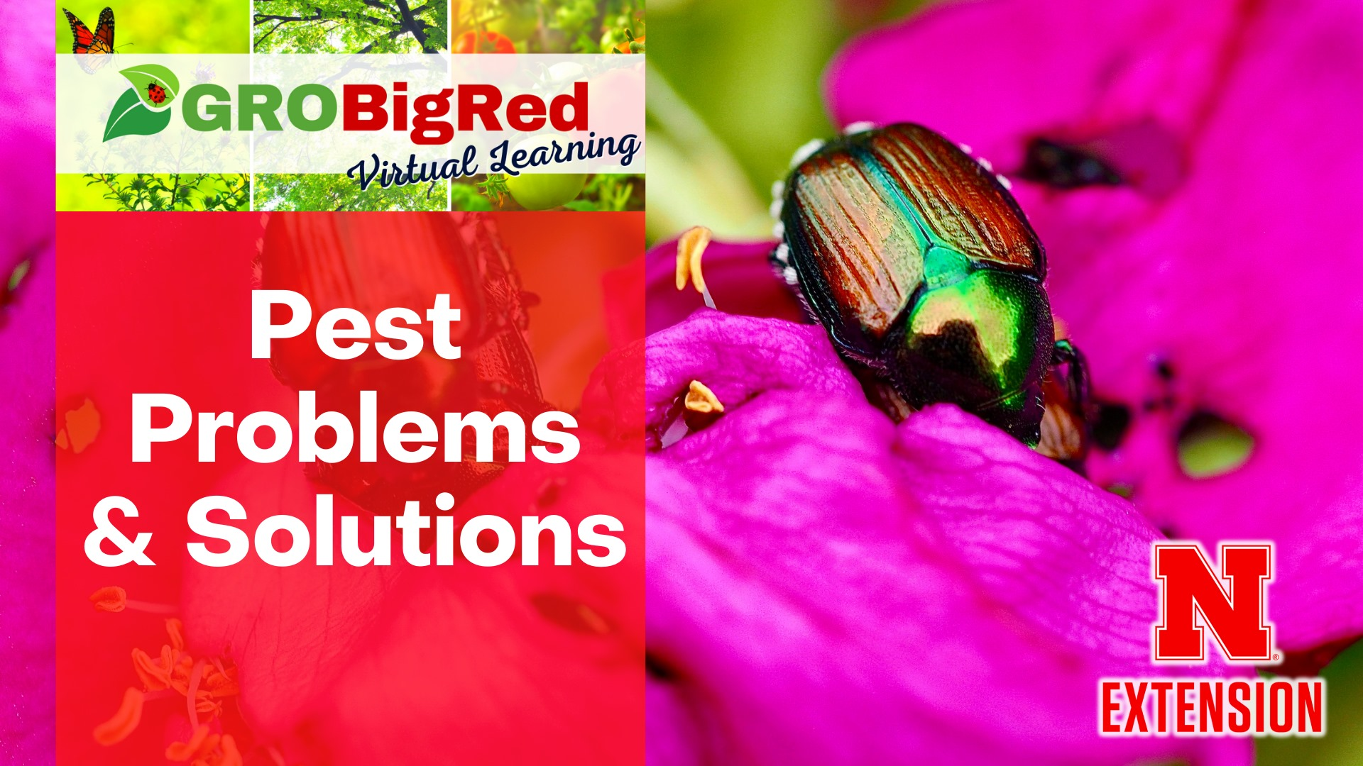 Pest Problems & Solutions