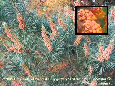 University of Nebraska Cooperative Extension in Lancaster County - Home