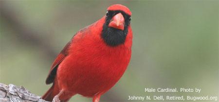 Attracting Winter Birds Nebraska Extension In Lancaster