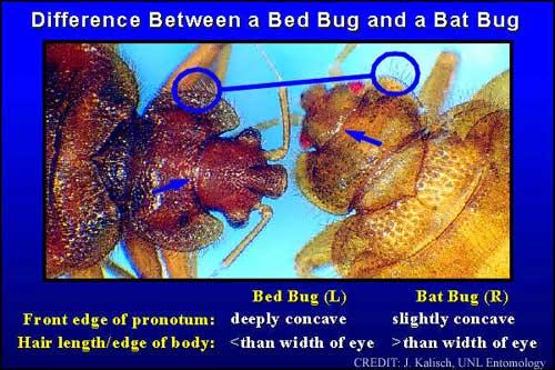 Can Bird Mites Infest Humans  Mite Treatments Kill Mites