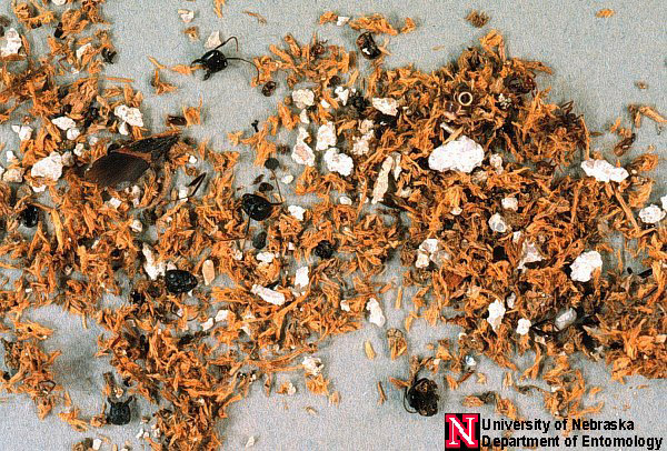 Carpenter Ant Management Carpant004 Nebraska Extension