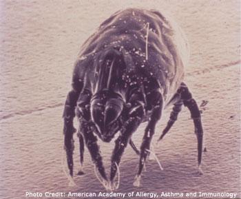 معلومات خطيره عن حشرة (بق الفراش)