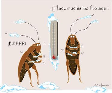 Manual Para El Control De Cucarachas Estrategias Con Un