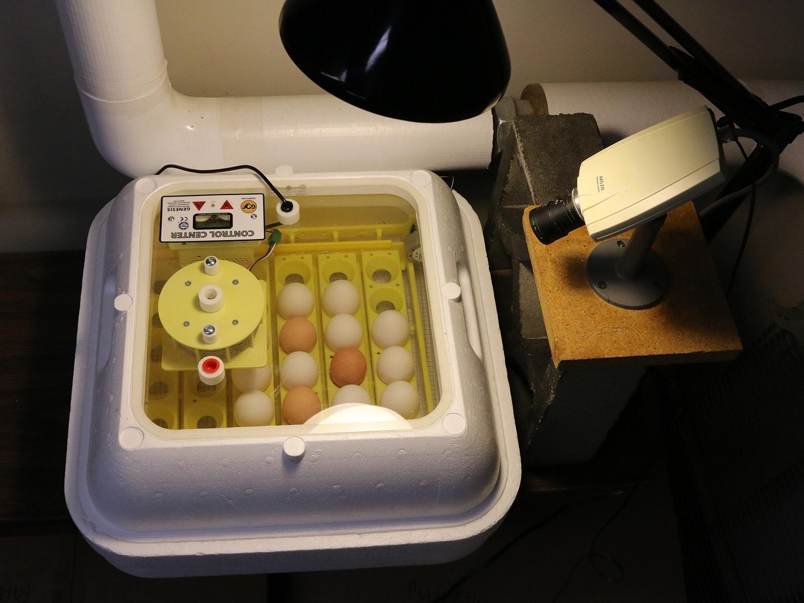 EGG Cam camera aimed at incubator